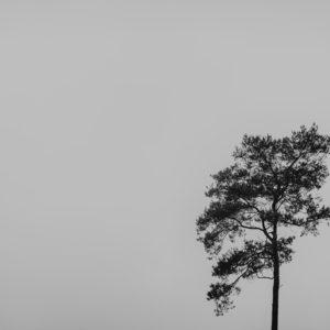 drzewo-minimalizm